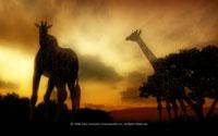 Free Afrika Wallpaper
