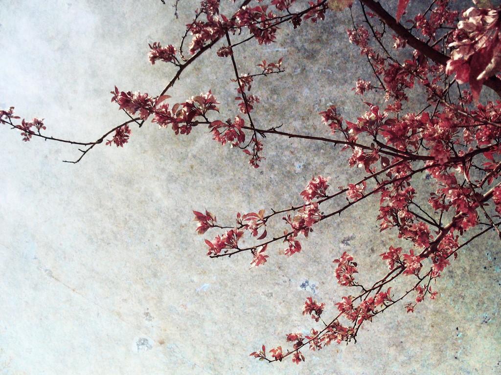 Abstract Wallpaper: Blossom