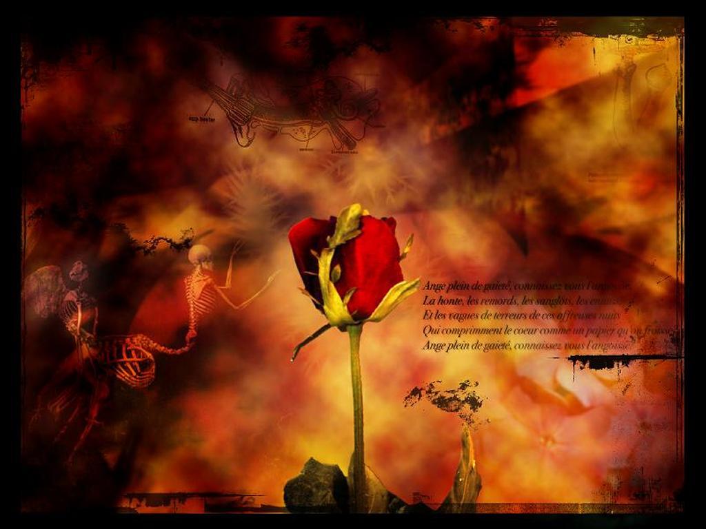 Abstract Wallpaper: Dead Flower