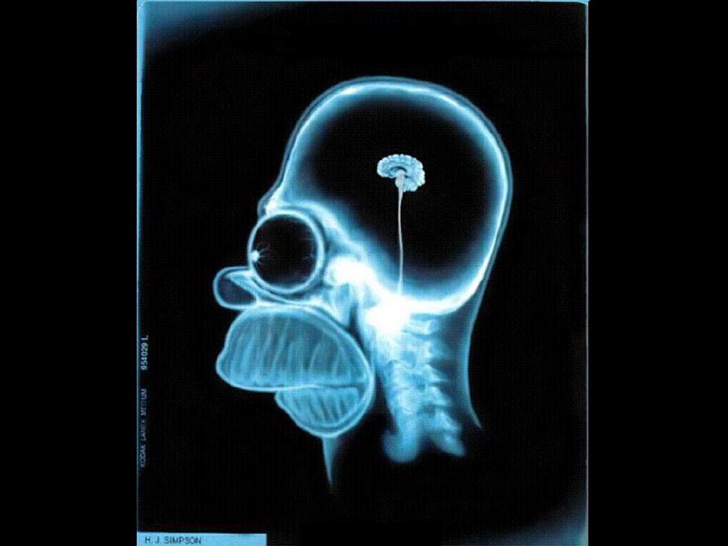 Cartoons Wallpaper: Homer's Brain