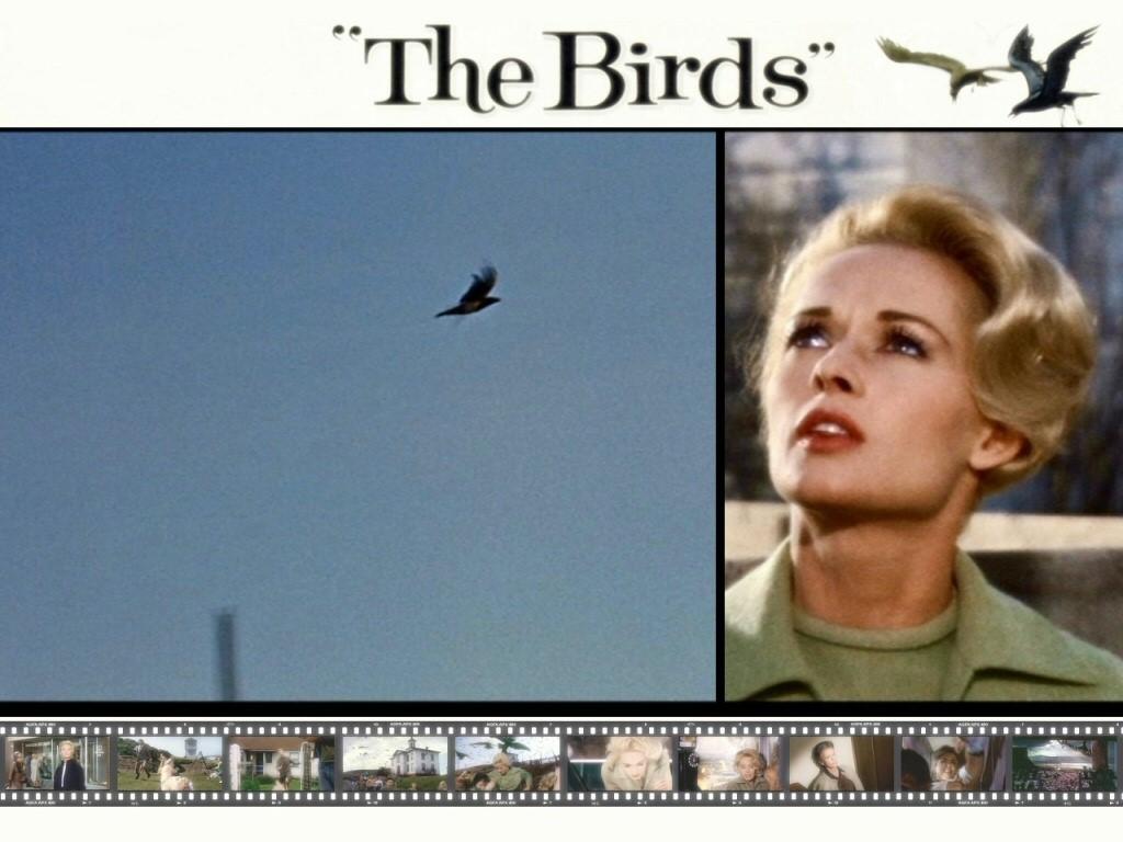 Movies Wallpaper: The Birds