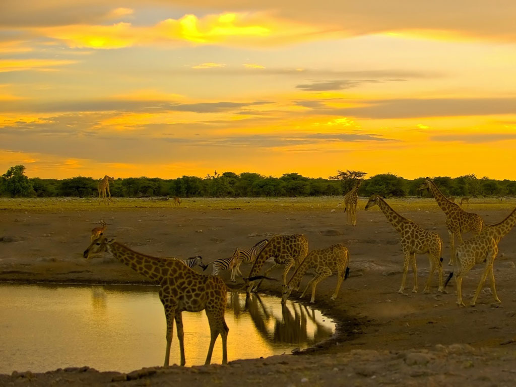 Nature Wallpaper: Africa - Watering