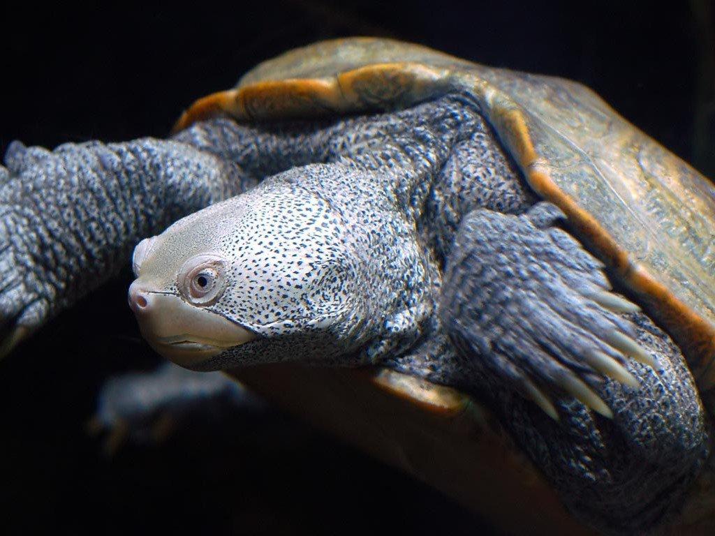Papel de Parede Gratuito de Natureza : Turtle