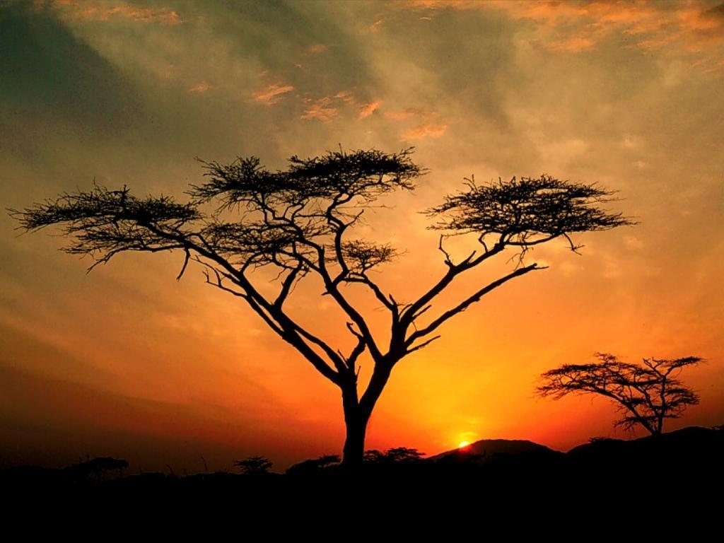 Nature Wallpaper: African Sunset