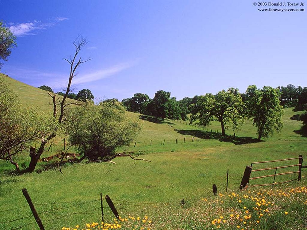 Nature Wallpaper: Amador County