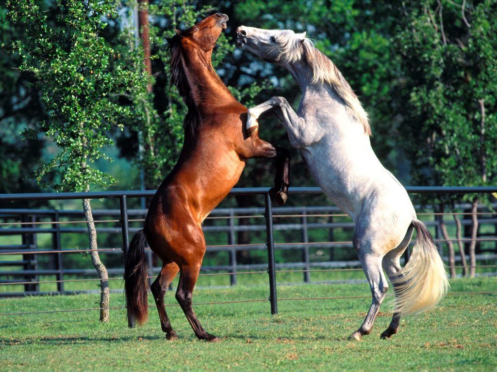 Nature Wallpaper: Andalusians