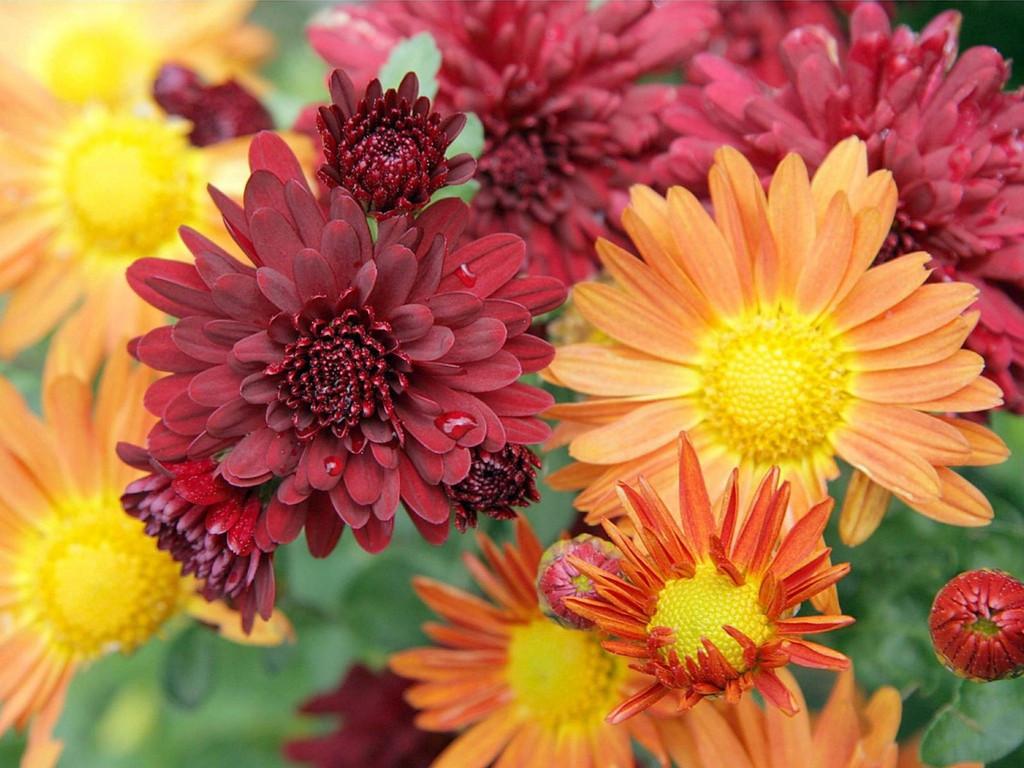 Nature Wallpaper: Bouquet