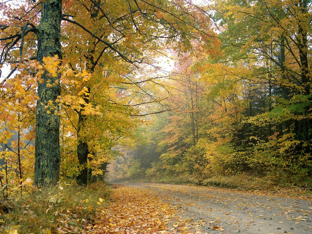 Nature Wallpaper: Autumn Afternoon - Vermont