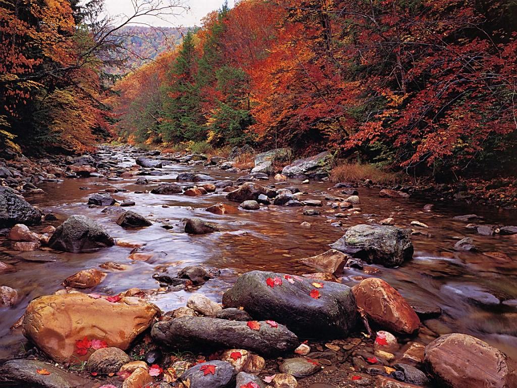 Nature Wallpaper: Autumn Brook