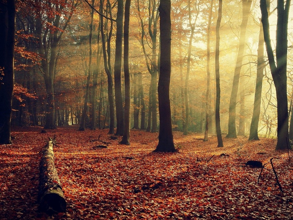 Nature Wallpaper: Autumn - Forest