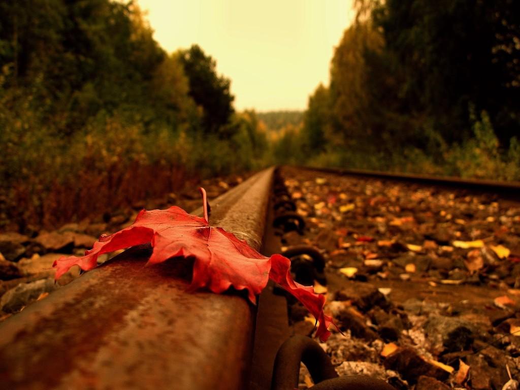 Nature Wallpaper: Autumn - Leaf on Rail