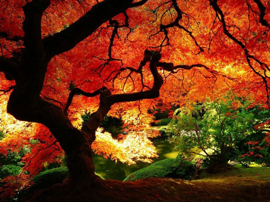 Nature Wallpaper: Autumn