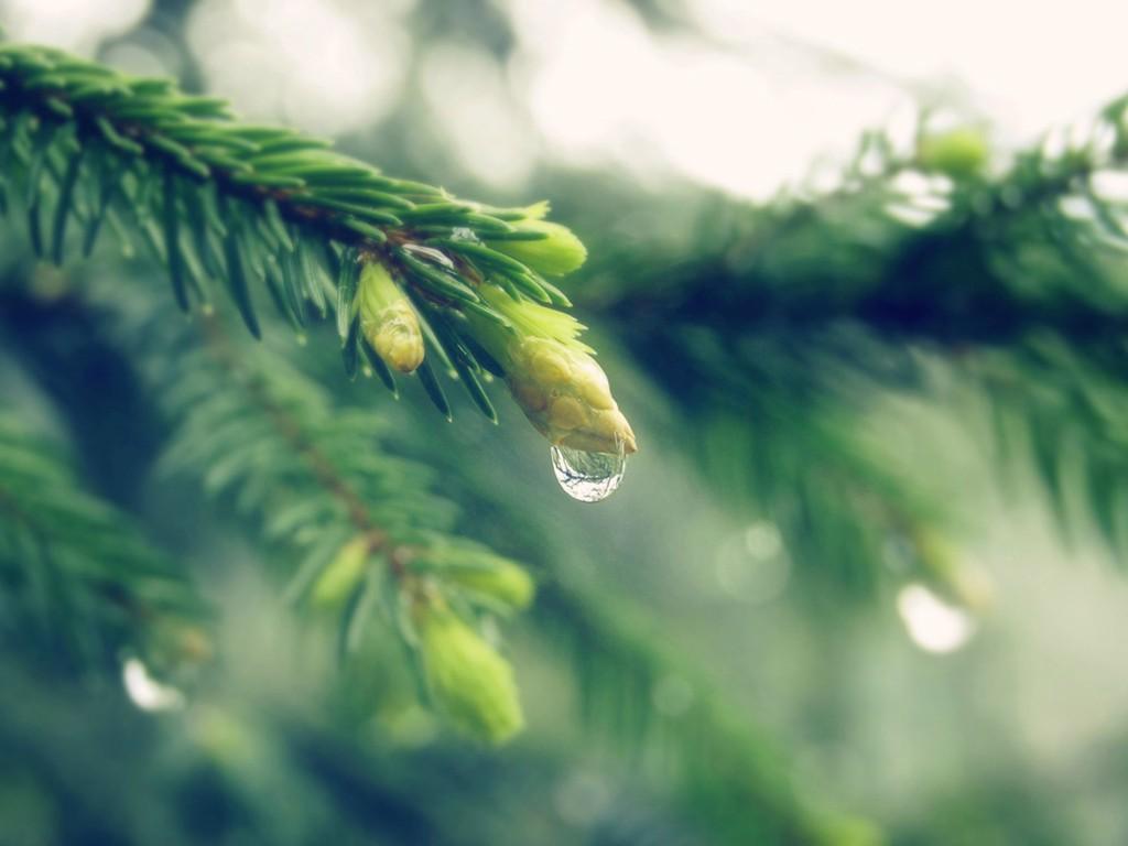 Nature Wallpaper: Water Drops