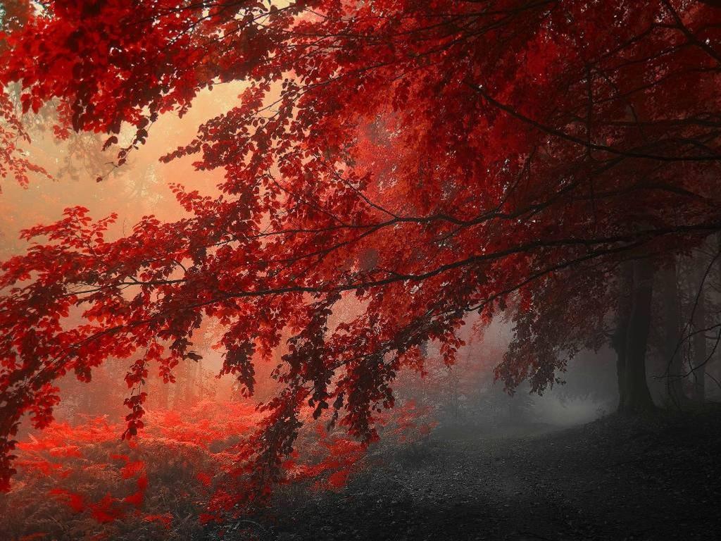 Papel de Parede Gratuito de Natureza : Outono