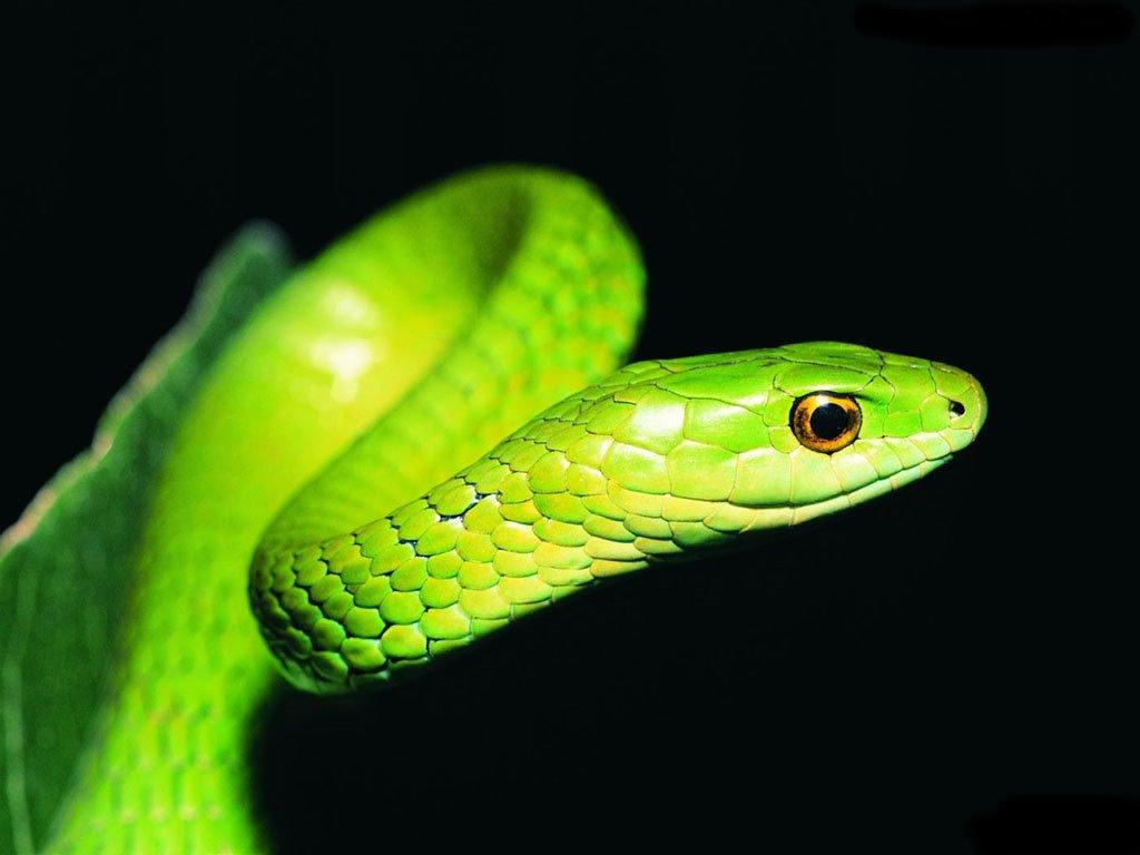 Nature Wallpaper: Python