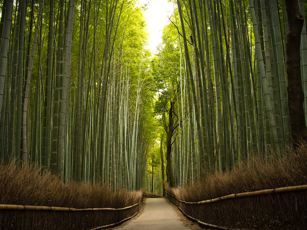 Nature Wallpaper: Bamboo Trail