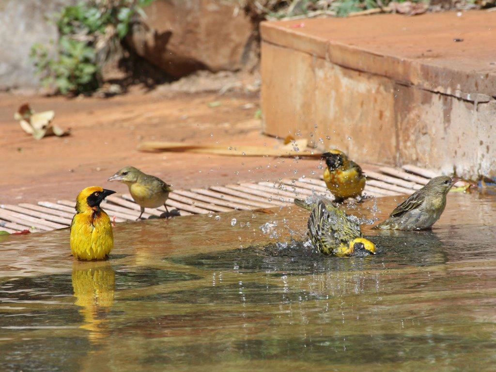 Nature Wallpaper: Bathing Birds