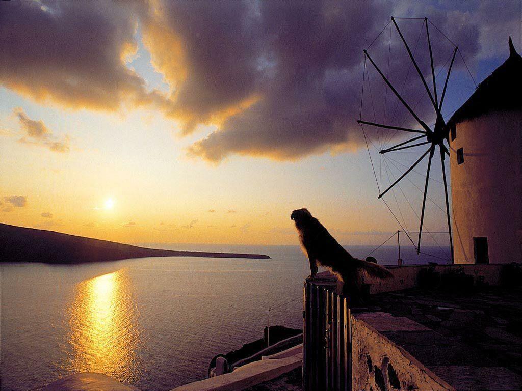 Nature Wallpaper: Beautiful Dawn