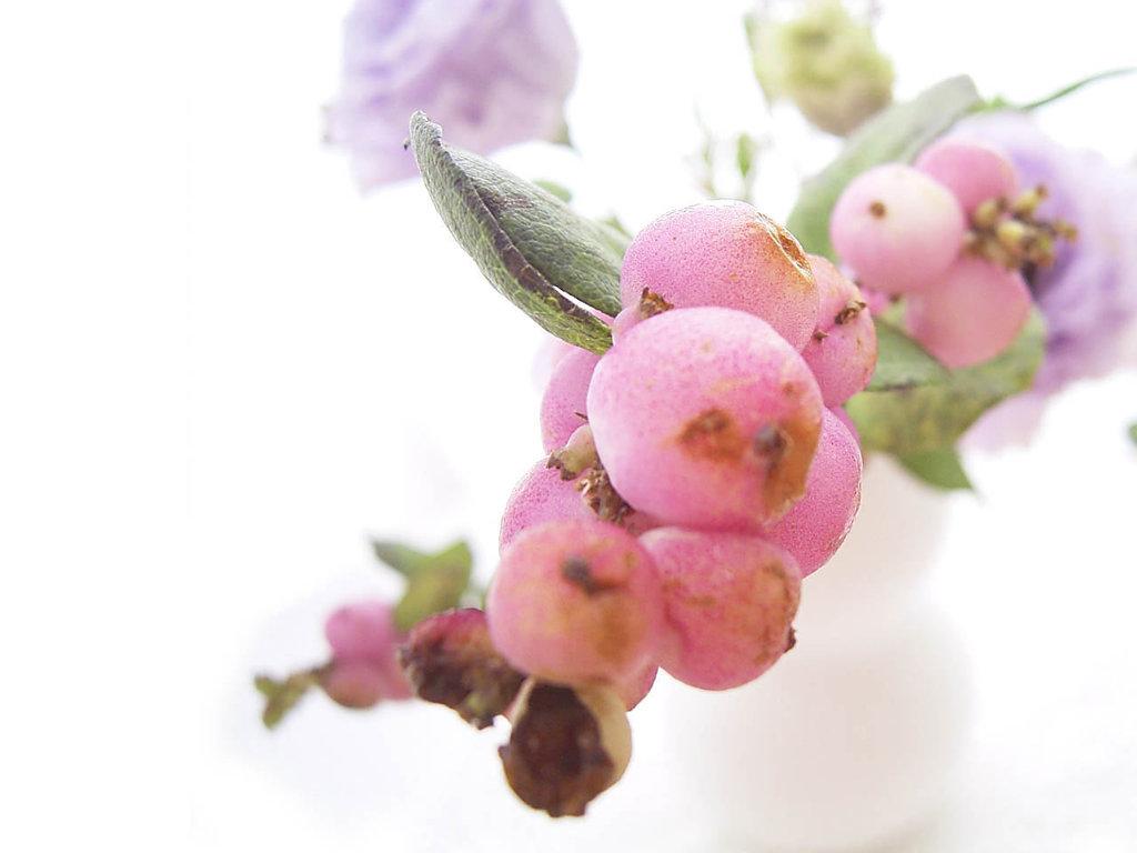 Nature Wallpaper: Berries