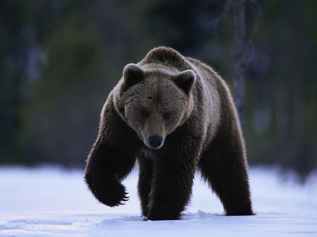Nature Wallpaper: Big Bear