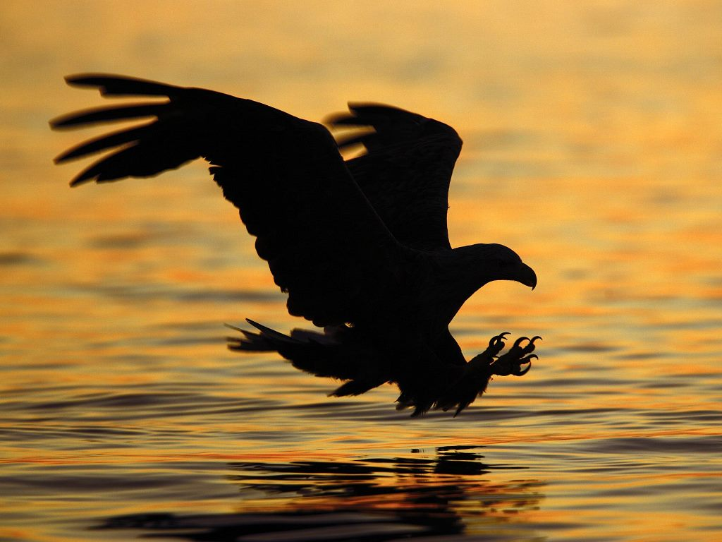 Nature Wallpaper: Bird of Prey