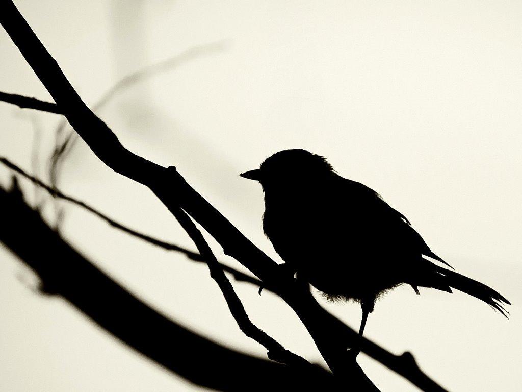 Nature Wallpaper: Bird