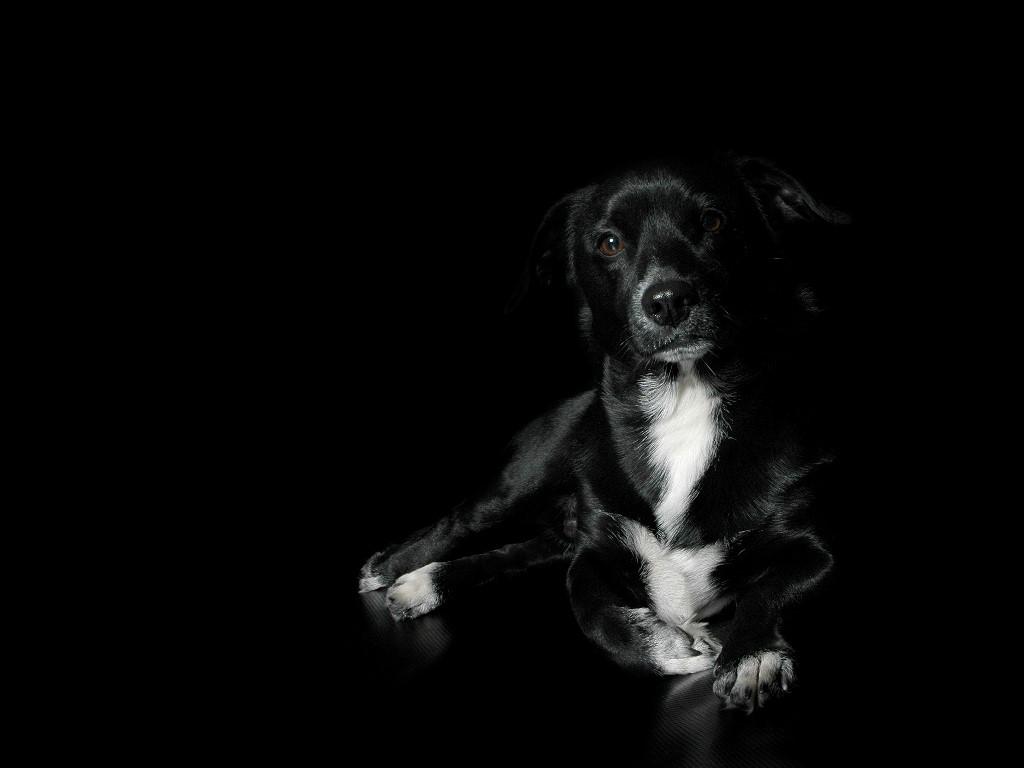 Nature Wallpaper: Black Dog