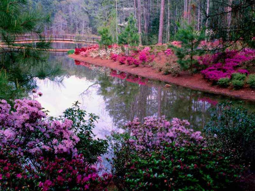 Nature Wallpaper: Callaway Pond