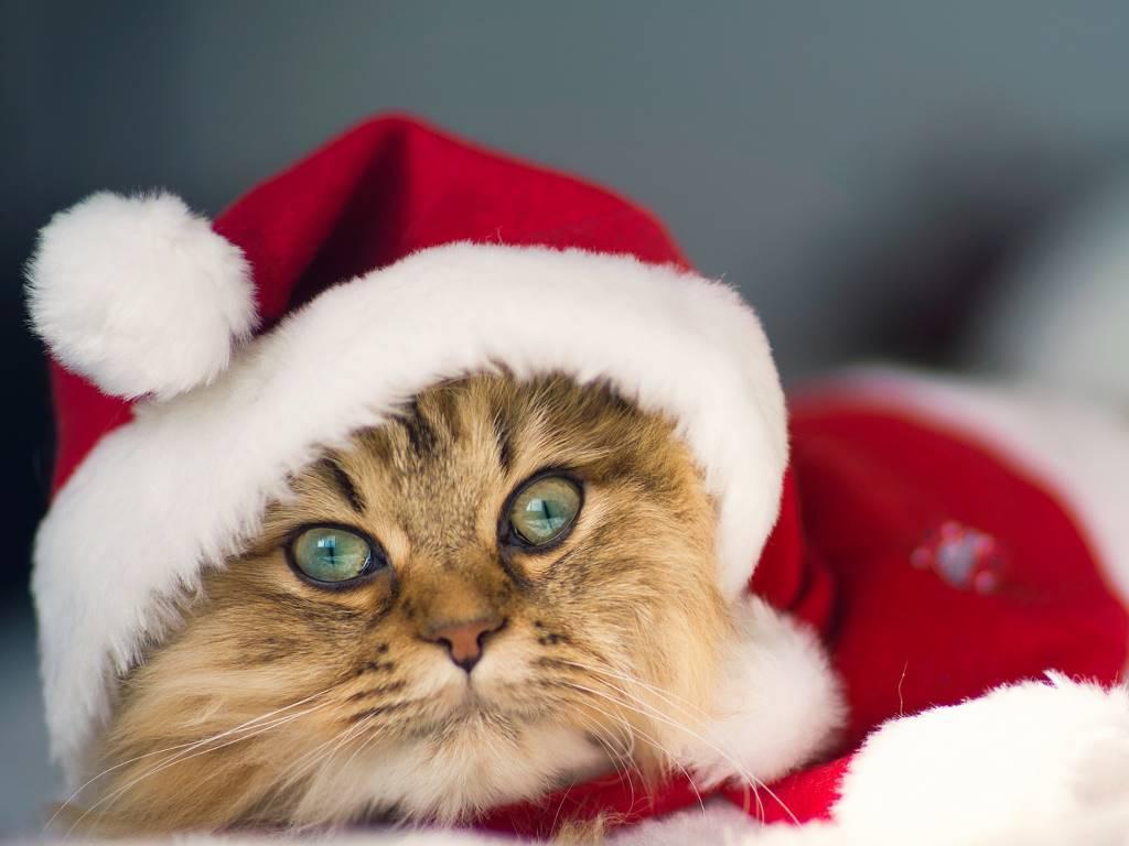 Nature Wallpaper: Cat - Christmas