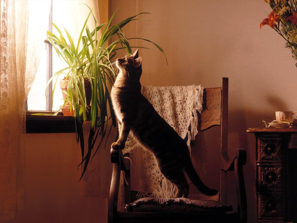 Nature Wallpaper: Cat