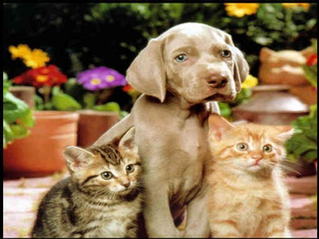Nature Wallpaper: Cats and a Dog