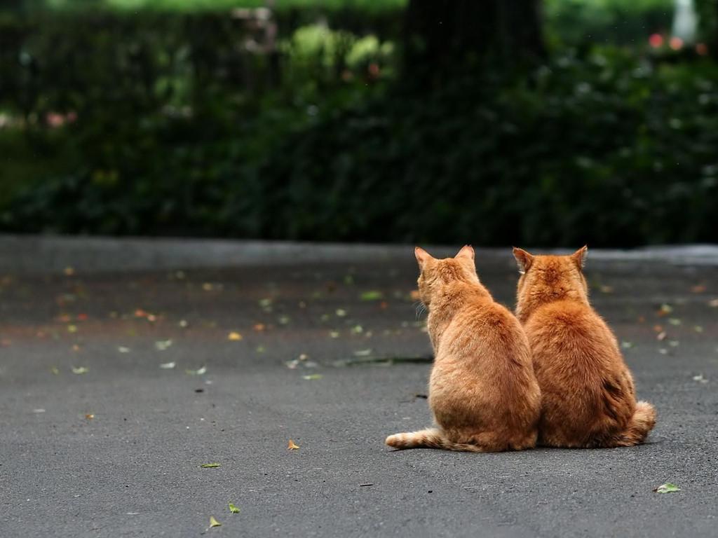Nature Wallpaper: Cats