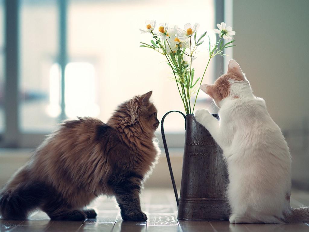 Nature Wallpaper: Cats - Flower