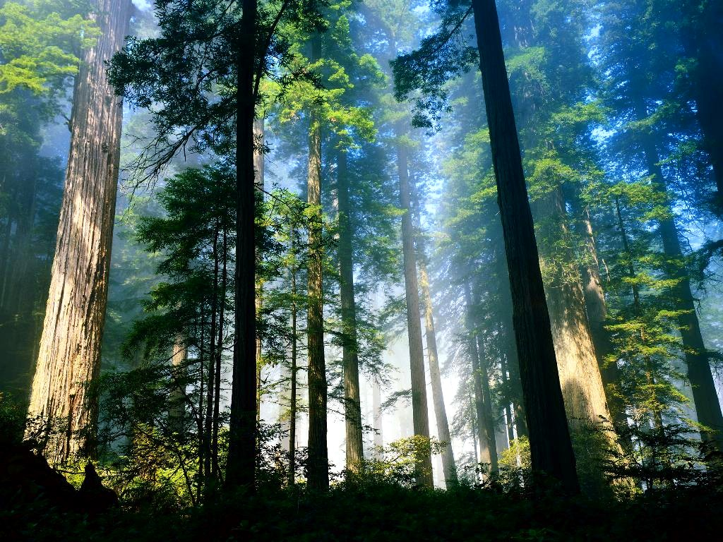 Nature Wallpaper: Chinese Forest