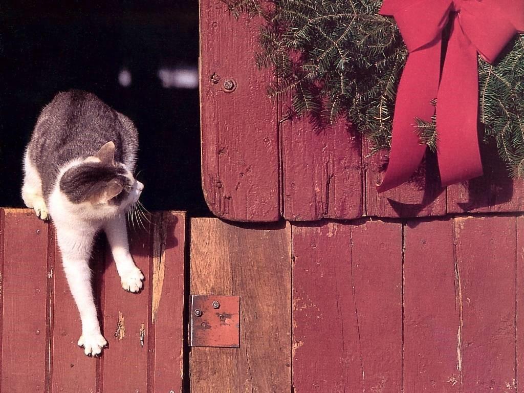 Nature Wallpaper: Christmas - Cat