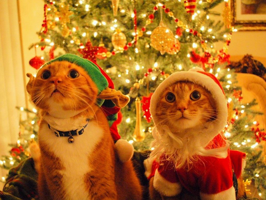 Nature Wallpaper: Cats - Christmas