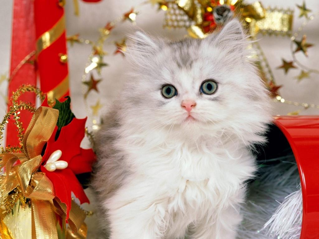 Nature Wallpaper: Christmas - Kitty