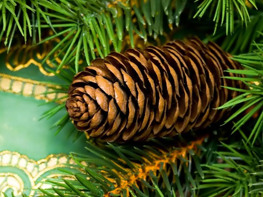 Nature Wallpaper: Christmas - Pine
