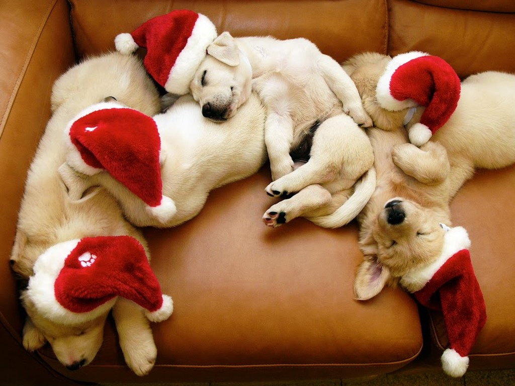 Nature Wallpaper: Christmas - Puppies