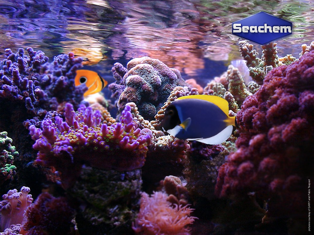 Nature Wallpaper: Coral Reef