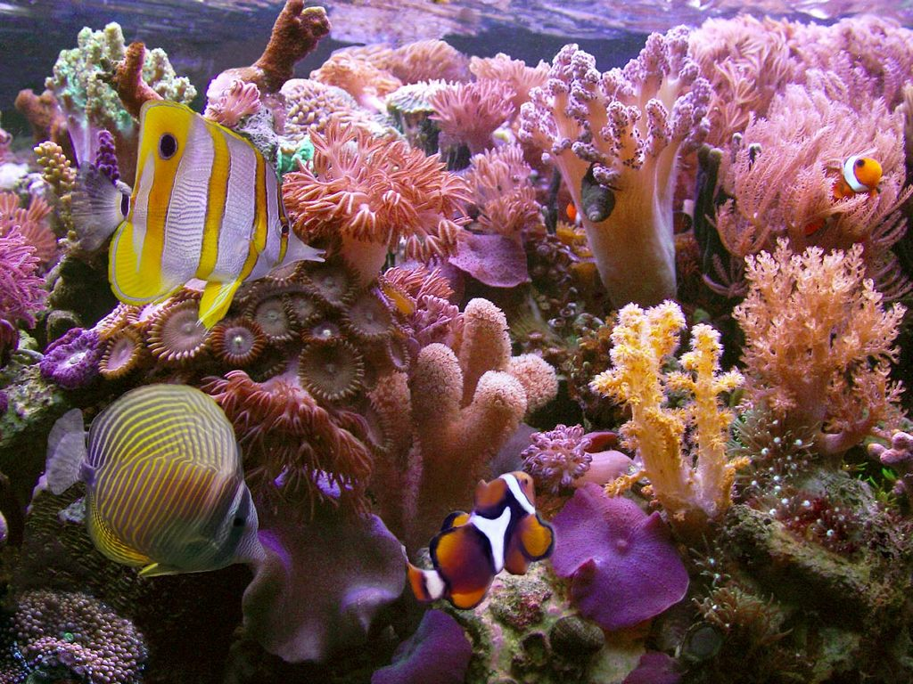 Nature Wallpaper: Coral Reef