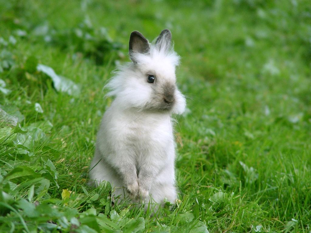 Nature Wallpaper: Cute Bunny