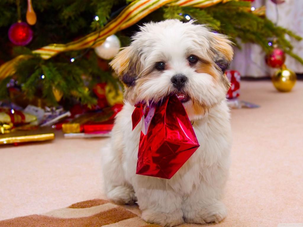 Nature Wallpaper: Dog - Christmas