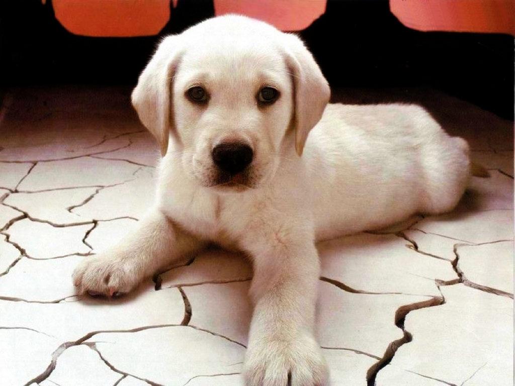 Nature Wallpaper: Cute Puppy