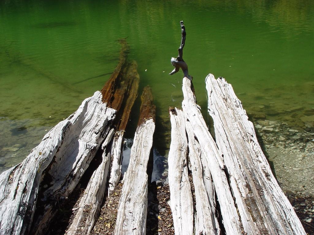Nature Wallpaper: Daocheng - Wood in Water
