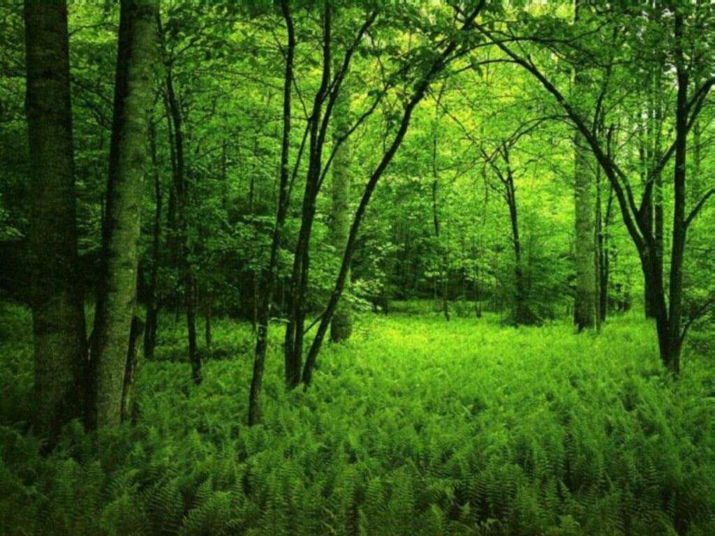 Nature Wallpaper: Dark Green Forest