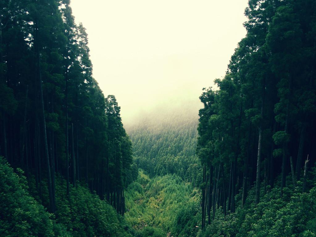 Nature Wallpaper: Deep Forest