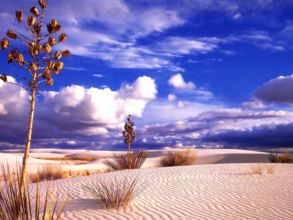Nature Wallpaper: Desert