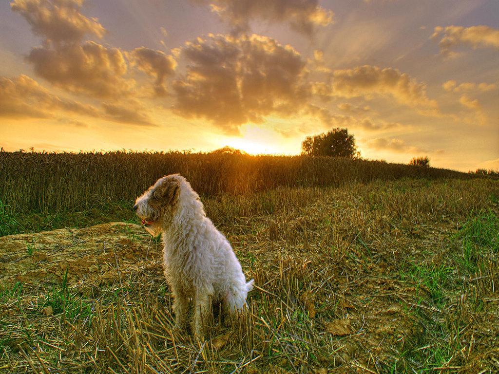 Papel de Parede Gratuito de Natureza : Cachorro - Fazenda