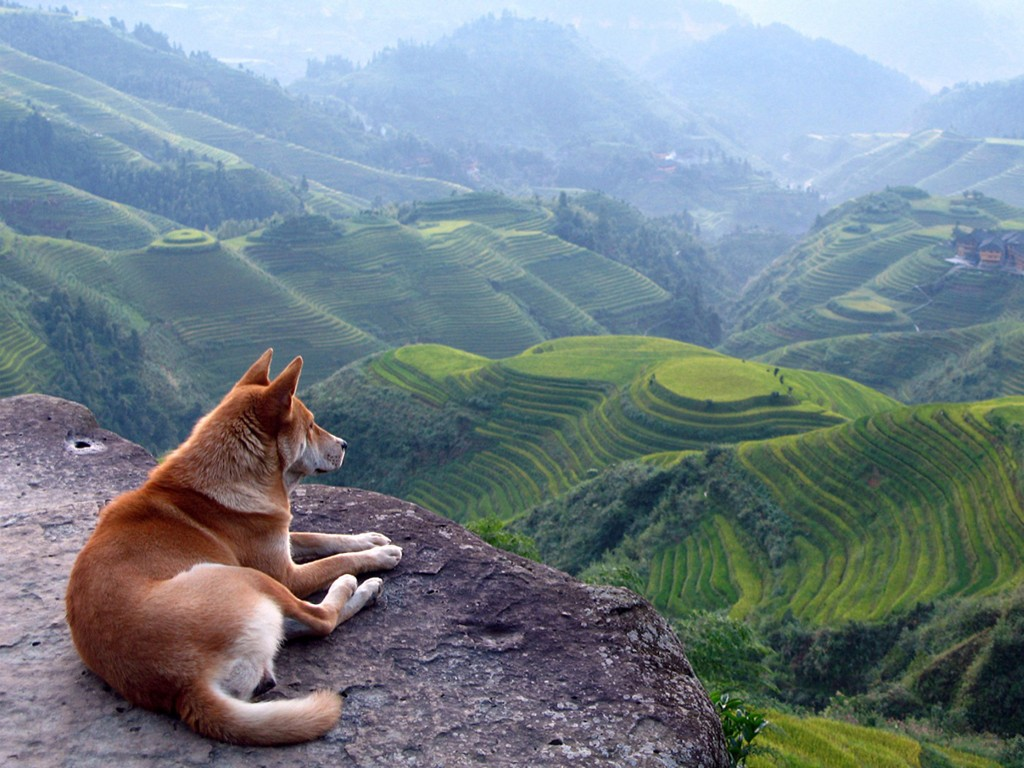 Nature Wallpaper: Dog - Landscape